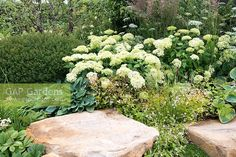 Borders with large stones planted with Hydrangea arborescens 'Annabelle', Gillenia trifoliata, Hosta sieboldiana 'Elegans' and Calamagrostis x acutiflora 'Karl Foerster' - Encore: A Music Lover's Garden, RHS Hampton Court Palace Flower Show 2015