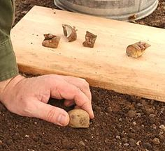 Planting potatoes This is a really great tutorial!