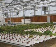 Hydroponics #marijuana #greenhouse #cannabis