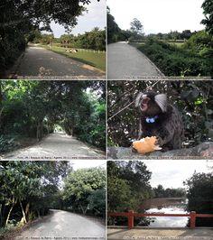 Bosque da Barra | Fotos