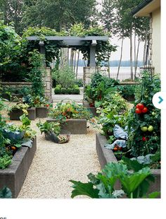 Bring a formal touch to your garden by growing your tomatoes in an obelisk, a cone-shaped decorative garden support. This attractive kitchen garden uses four matching tomato-filled obelisks in central raised beds to create balance and add an air of drama.