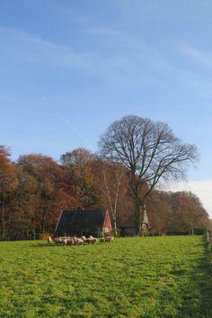 2014-11-23 Kudde schapen voor twentse hoeve nabij Vasse