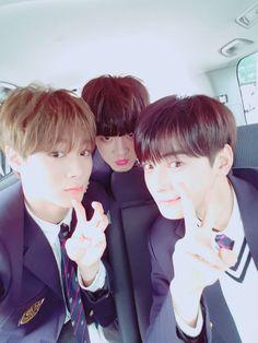 3 bias juntos