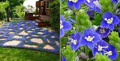 Ground cover for fantastic garden design- blue-ground cover-of-the-flower-Ehrenpreis- (Veronica prostrate) - Modern Garden Design, Backyard Garden Design, Backyard Projects, Garden Projects, Backyard Landscaping, Backyard Ideas, Green Garden, Herb Garden, Garden Pots