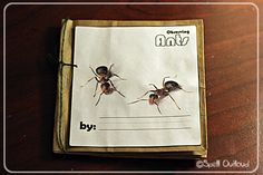 Science Journal - Ants