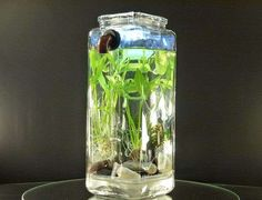 Self-Washing Fish Tanks - NoClean Aquariums Ensures Hassle-Free Care of Your Pets
