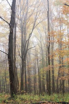 autumn in the smoky mountains pinterest | Autumn in the Smoky Mountains | The Frontiersman's Daughter