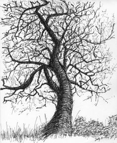 """Black and white nature art print from pen & ink sketch - """"Roundstone Tree"""" signed, 8x10 - wall decor"""
