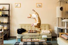 36 Perfectly Timed Photos Of Cats Caught In Midair