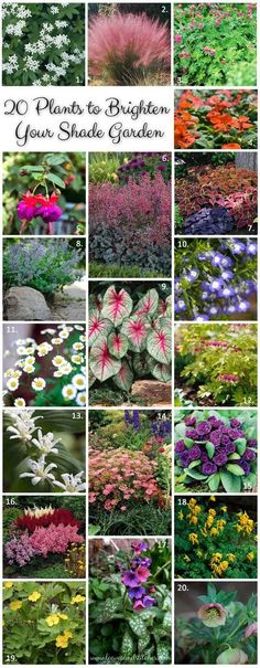 20 plants to brighten your shade garden. Annuals, perennials and herbs for shady places. by Marly Campuzano