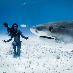 Re-defining our perceptions through connection conservation and art.  @hannahmermaid dancing with tiger sharks Photo by @shawnheinrichs  Body spray art by @julia4airbrush #hannahfraser #hannahmermaid #dangerousjobs #underwater #dance #dive #mermaid #model #reallifeavatar # #tigershark #shark #shawnheinrichs #bluespherefoundation #bebrave #UnderwaterPhoto #UnderwaterModel #underwater #ocean #animal #me #animalconservation #animalconnection