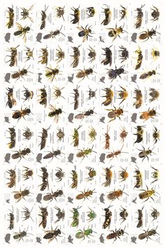 A bee poster! Get from  https://www.facebook.com/photo.php?fbid=359020760909407&set=a.227039040774247.1073741825.227016960776455&type=1&theater
