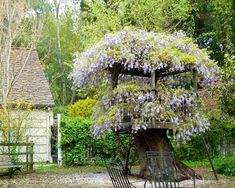 Creative way to use the 100+ year old tree as a strong base for sturdy platforms with areas to display the flowers.