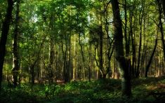 forest   ... - Desktop wallpapers & photos - Forest - In the forest - 1920 x 1200