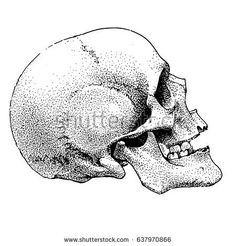 Hand drawn realistic dotted style skull. Vector design tattoo or t-shirt print.