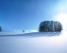 Pine Landscape Blue Trees Hokkaido Shadows Snowyfield Japan