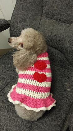Get your cat (or dog) in the holiday spirit with this cute striped sweater!