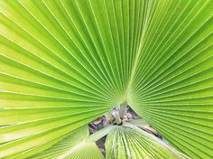 MY/CG - My Caribbean Gateway features one of the Trinidad & Tobago issue partners, the chic Bacolet Beach Club in Tobago Beach Club, Trinidad And Tobago, Plant Leaves, Places To Visit