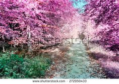 Purple infrared forest landscape with footpath