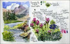 A Maine Artists Garden Journal