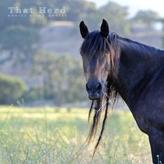 Daily Blog | That Herd | Horses Being Horses | Page 6
