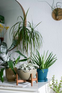 interior, interior styling, boho, bohemian, mid-century, coffee table, plants, Finn Juhl, Danish design, Bluetooth speaker, planter, Modernica, Grundig
