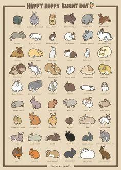 Cute Animal Drawings, Kawaii Drawings, Cute Drawings, Rabbit Art, Pet Rabbit, Dwarf Rabbit, Cute Baby Bunnies, Cute Baby Animals, Pet Bunny Rabbits