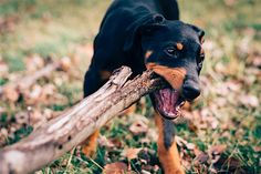 PSA: Keep Your Pets Safe During Hunting Season https://www.petful.com/misc/prevent-fatal-accidents-keeping-pets-safe-hunting-season/