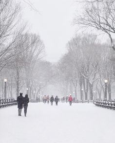 Snow-covered trees and glowing street lamps and the most romantic scene in Central Park
