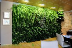 Jardín vertical interior en un despacho privado varios meses después