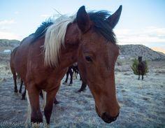 Wild Horses in the Nevada desert Wild Horse 2 Nevada Ghost Towns, Nevada Desert, Wild Horses, Deviantart, Animals, Animales, Animaux, Animal, Animais