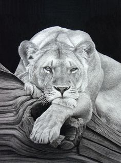 Daydreaming  (Pencil on paper) by StephenAinsworth.deviantart.com on @deviantART