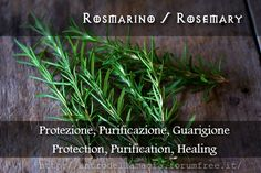 Rosmarino // Rosemary // Protezione, Purificazione, Guarigione // Protection, Purification, Healing // L'antro della magia http://antrodellamagia.forumfree.it/?t=56725934