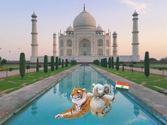 CON LOS MONJES BUDISTAS ¿Conocer Asia? ¡Por qué no! y comenzó con el Taj Mahal. Niño pierde su juguete favorito, sus padres le dicen que se fue de viaje; e Internet los ayuda