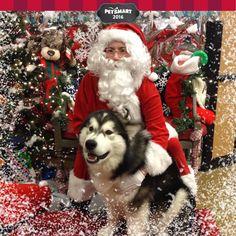 Here's my Pet Photo Burns, Husky, Pets, Animals, Animais, Animales, Animaux, Animal, Husky Dog