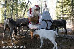 Le Père Noël s'occupe de son petit renne en Laponie