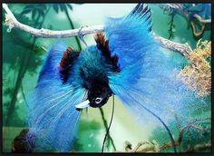 4 Burung Tercantik Asal Indonesia (Menurut Mkicau) | Burung Master