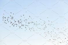 birds flying in the sky by rsooll on @creativemarket