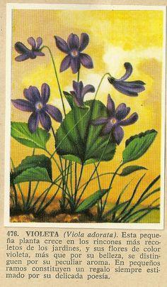 Album Historia Natural 1968  476 Violeta