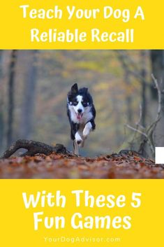 5 Fun Games to Teach Your Dog a Reliable Recall Training Your Puppy, Dog Training Tips, Dog Agility Training, Husky Training, Training Quotes, Training Pads, Brain Training, Potty Training, Dog Care Tips