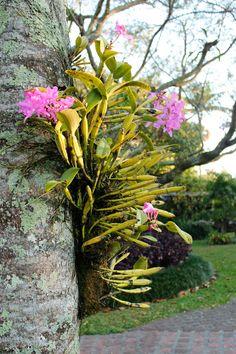 Flowers, Costa Rica