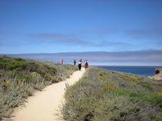 Poppy Peach: Point Lobos, An Outdoor Classroom