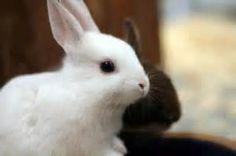 Recherche Comment prendre soin de bebes lapins. Vues 222851.