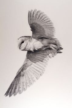flying barn owl tattoo - Google Search
