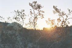 joshua tree by erik wåhlström Birds In The Sky, Arbour, Something Else, Live Plants, Geology, Fields, The Good Place, Flora, Sunrise