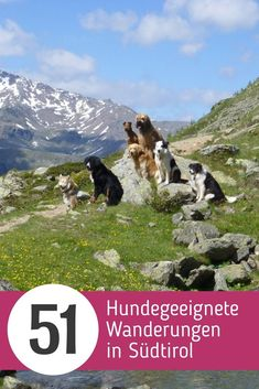 """[Werbung] Rother hiking book """"Hiking with dog - South Tyrol"""" - All tours tested for dog fitness - Difficulty assessments for humans and dogs - Expert tips for dealing with grazing cattle - Information Europa Camping, Hiking Dogs, South Tyrol, Dog Walking, Mother Nature, Dogs And Puppies, Adventure, Travel, Cattle Dogs"""