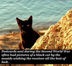Fun Facts About Cats, Cat Facts, Dog Cat, Crazy Cat Lady, Crazy Cats, Funny Animal Memes, Funny Animals, Cat Posters, Dogs