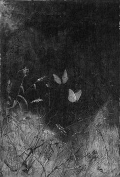 vintage butterfly/moth illustration by William Baxter Closson Gravure Illustration, Illustration Art, Arte Indie, Arte Obscura, Photocollage, Wood Engraving, Aesthetic Art, Dark Art, Wall Collage