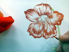 Lizzie Harper nasturtium botanical illustration step 6