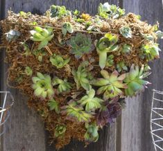 diy succulent hanging wall basket. I've got an old funnel shaped wire hanging basket and a bale of oregon moss that would be perfect for something like this. But first, gotta find a place to hang it.